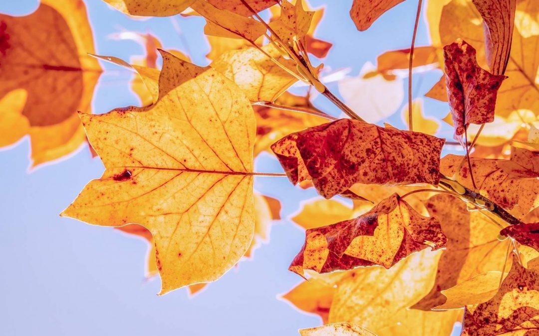 El otoño comienza hoy, pero no se sentirá así