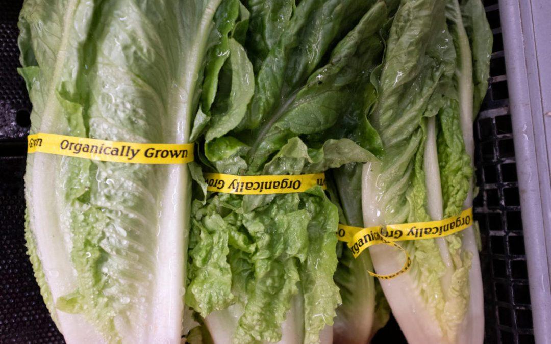 Retiran la lechuga romana de las tiendas Walmart por posible brote de la bacteria E. coli